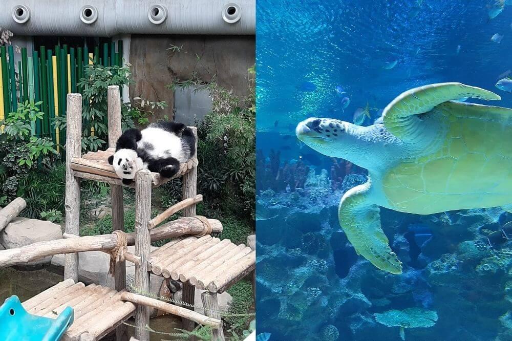 動物園、水族館、テーマパークで子供は大興奮